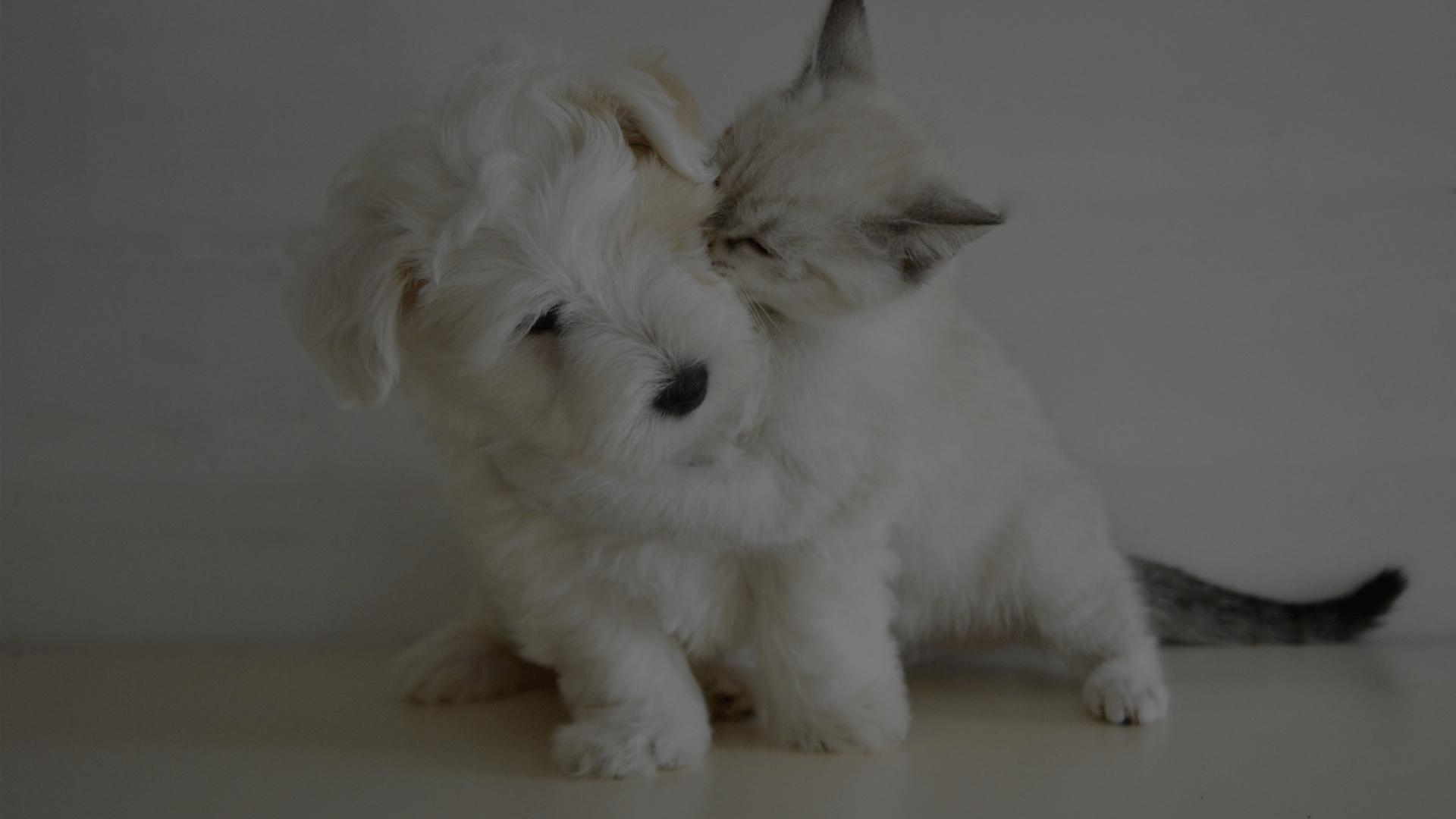 Pet Clinic in Aurora